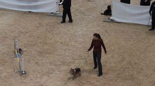 Just remember Sir Rico of Agility
