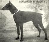 Graf Waldo von der Strengbach