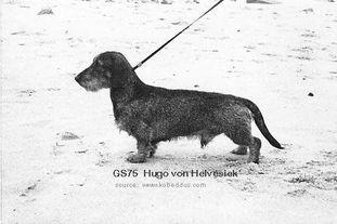 Hugo von Helvesiek