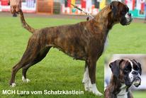 Lara vom Schatzkästlein (VDH/DBZB 236267)
