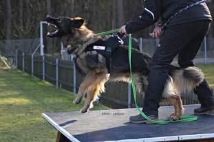 Steini's Dog Centre Aragon