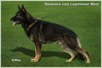 Havanero vom Leipheimer Moor