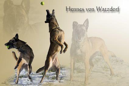 Hennes von Watzdorf