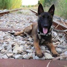 R'Nala de Dog'Attitude