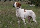 Be bop du Mas du Zouave