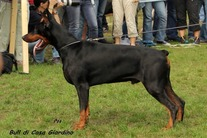 Bull di Casa Giardino