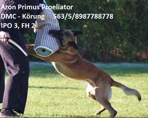 Aron Primus Proeliator