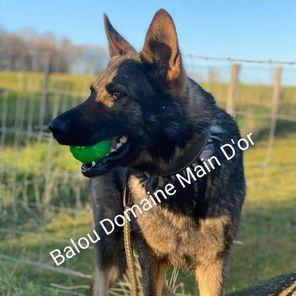 Balou Domaine Main D'or