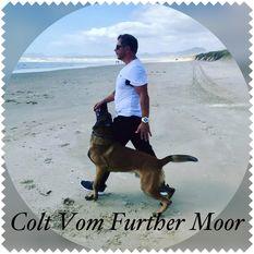 Colt vom Further Moor