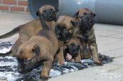 Pups O'Pepper & Linck weken