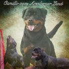 Camillo vom Arenberger Land