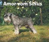Amor vom Sirius