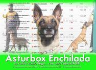 Asturbox Enchilada