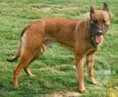 Arko (Sommers)
