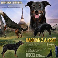 Hadrian z Ajysyt