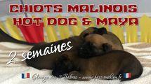 Hot dog & Maya