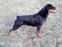 Atlanta Gero-dogs
