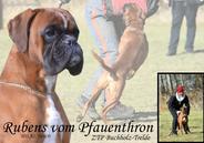 Rubens vom Pfauenthron