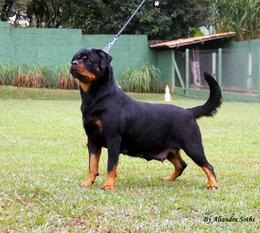 Xara from Royal Breed