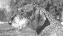 Mackintosh de Bas-Heers