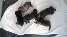 pups @ 4 days