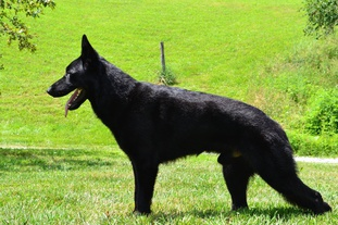 Jagr von Wolfstraum