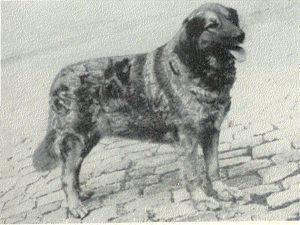 Birka V. Carolshofen 1461