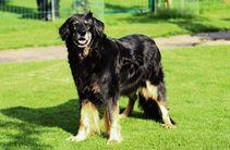 Doro ex Canis Lupus