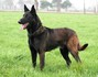 Halden NPA Detection Dog