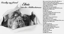 Elvis von der Mühlbachstrasse