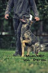 Hunter von Peroh