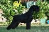 Verdi de Trufas Negras