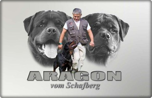 Aragon vom Schafberg