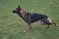 Sund Hund Windy