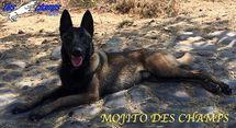 Mojito des Champs