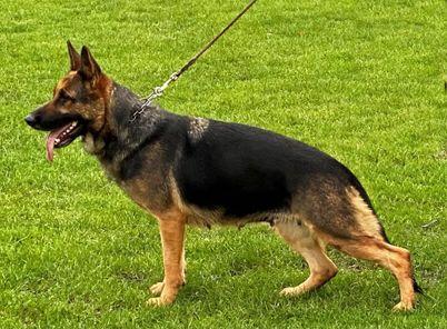 Vicki von Burg Tiersperg