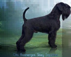 Otis Boanergos Skiey Sapphire