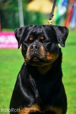 Beba from Royal Breed
