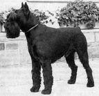 Goliath de Ludolphi