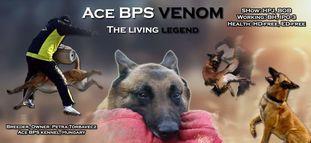 Ace BPS Venom