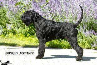 Sophirol Acotango