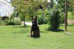 Torra BHR 340441 (Lukacevic)