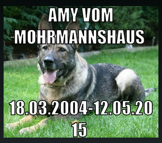 Amy vom Mohrmannshaus