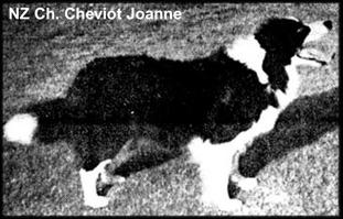 Cheviot Joanne