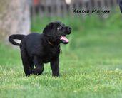 6 weeks ,,K,,Monur