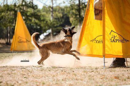 Quirly vom schnellen Fuchs