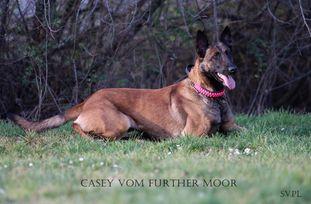 Casey vom Further Moor