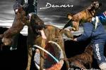 Denvers (LOF 2372/314)