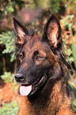 Axa Cave Canis