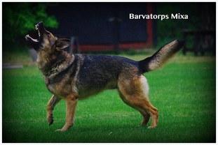 Barvatorps Mixa